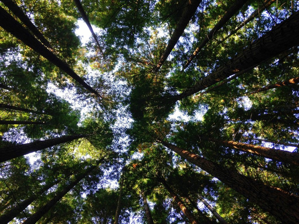Couverture - documentaires - nature et environnement