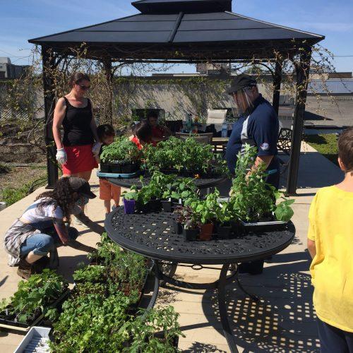 Jardin collectif toit vert